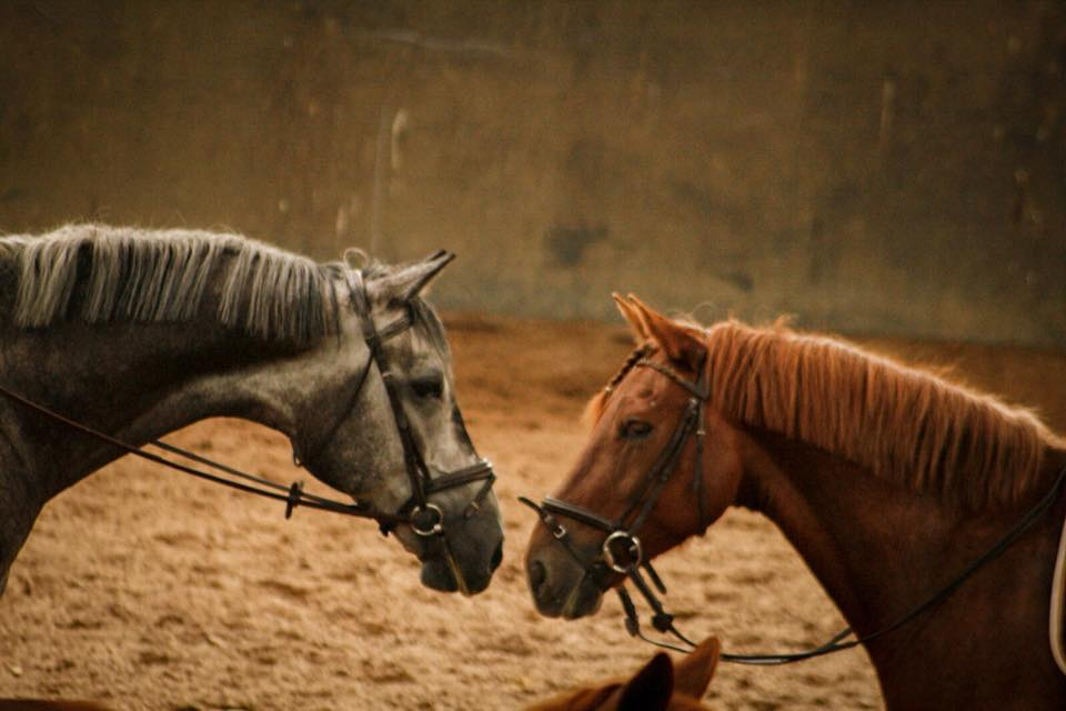Stages d'automne – Cheval & Poney – Semaine 1