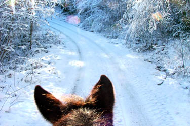 Stages d'hiver – Poney – Semaine 1