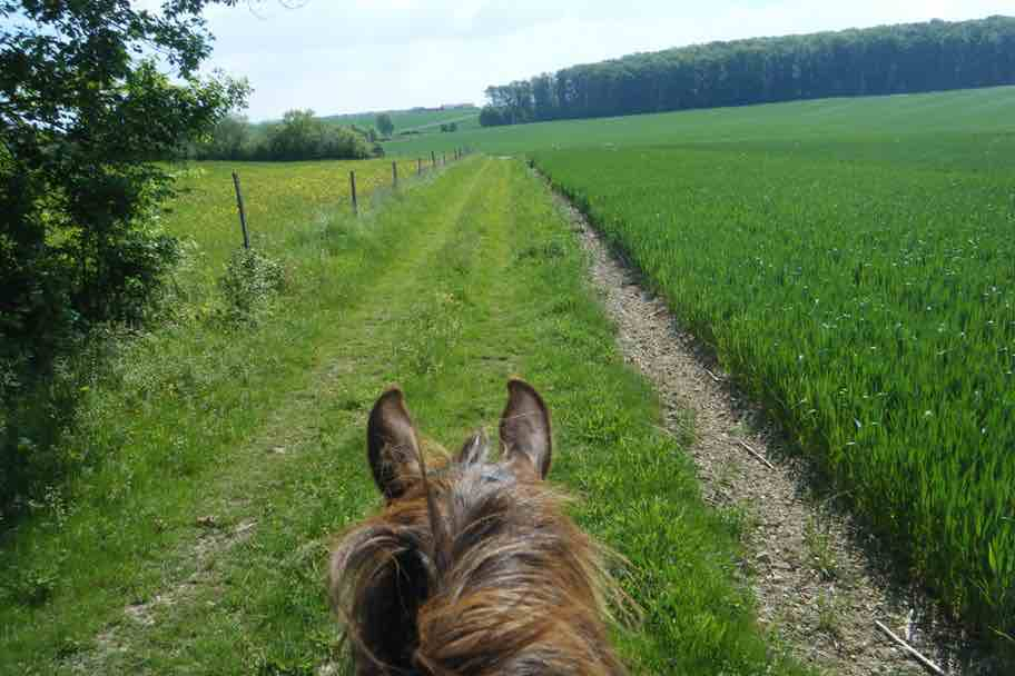 Stages de Printemps – Poney – Semaine 1